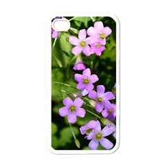 Little Purple Flowers Apple Iphone 4 Case (white) by timelessartoncanvas