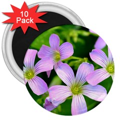 Little Purple Flowers 2 3  Magnets (10 Pack)  by timelessartoncanvas