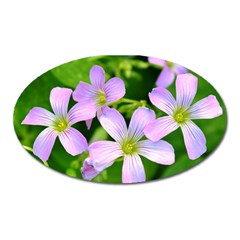 Little Purple Flowers 2 Oval Magnet by timelessartoncanvas