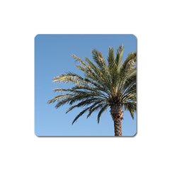 Tropical Palm Tree  Square Magnet by BrightVibesDesign