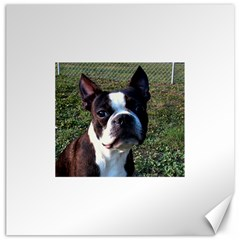 Boston Terrier Canvas 12  x 12   by TailWags