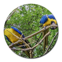 South American Couple Of Parrots Round Mousepads by dflcprints