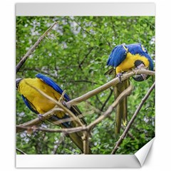 South American Couple Of Parrots Canvas 20  X 24   by dflcprints