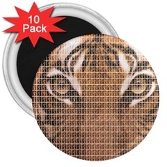 Tiger Tiger 3  Magnets (10 Pack)  by cocksoupart