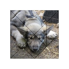 Wolf pup Acrylic Tangram Puzzle (4  x 4 ) by jackiepopp