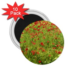 Poppy Vii 2 25  Magnets (10 Pack)  by colorfulartwork