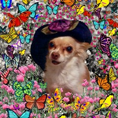 Chi Chi In Butterflies, Chihuahua Dog In Cute Hat Canvas 12  X 12   by DianeClancy