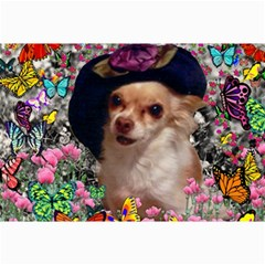 Chi Chi In Butterflies, Chihuahua Dog In Cute Hat Canvas 24  X 36  by DianeClancy
