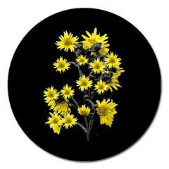 Sunflowers Over Black Magnet 5  (round) by dflcprints