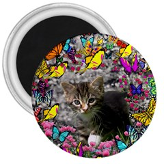 Emma In Butterflies I, Gray Tabby Kitten 3  Magnets by DianeClancy