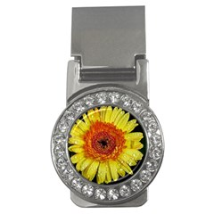 Yellow Flower Close Up Money Clips (cz)  by MichaelMoriartyPhotography