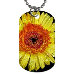 Yellow Flower Close Up Dog Tag (two Sides) by MichaelMoriartyPhotography