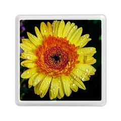 Yellow Flower Close Up Memory Card Reader (square)  by MichaelMoriartyPhotography