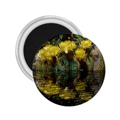 Cactus Flowers With Reflection Pool 2 25  Magnets by MichaelMoriartyPhotography