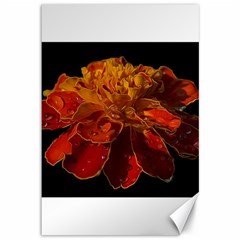 Marigold On Black Canvas 12  X 18   by MichaelMoriartyPhotography