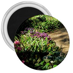 Shadowed Ground Cover 3  Magnets by ArtsFolly