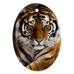 Tiger Ornament (Oval)