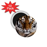 Tiger 1.75  Magnet (10 pack)