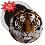 Tiger 3  Magnet (10 pack)