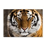 Tiger Sticker A4 (10 pack)
