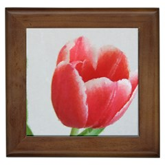 Red Tulip Watercolor Painting Framed Tiles by picsaspassion