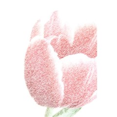 Red Tulip pencil drawing 5.5  x 8.5  Notebooks by picsaspassion