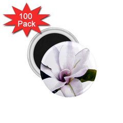 Magnolia Wit Aquarel Painting Art 1 75  Magnets (100 Pack)  by picsaspassion