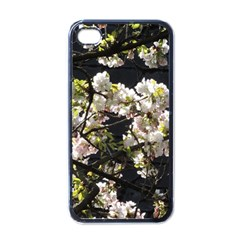 Japanese Cherry Blossom Apple Iphone 4 Case (black) by picsaspassion
