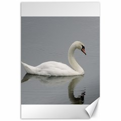 Swimming white Swan Canvas 20  x 30   by picsaspassion