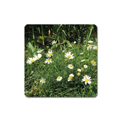 Wild Daisy Summer Flowers Square Magnet by picsaspassion