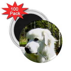 Great Pyrenees 2.25  Magnets (100 pack)  by TailWags