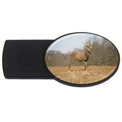 Red Deer Stag On A Hill Usb Flash Drive Oval (4 Gb)  by GiftsbyNature