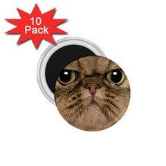 Cute Persian Cat,face In Closeup 1.75  Magnets (10 pack)  by Zeze