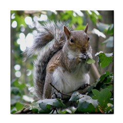 Gray Squirrel Eating Sycamore Seed Face Towel by GiftsbyNature