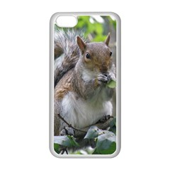 Gray Squirrel Eating Sycamore Seed Apple Iphone 5c Seamless Case (white) by GiftsbyNature