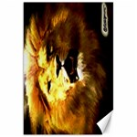 Lion 20x30 - Canvas 20  x 30