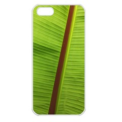 Ensete Leaf Apple Iphone 5 Seamless Case (white) by picsaspassion