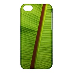 Ensete Leaf Apple Iphone 5c Hardshell Case by picsaspassion