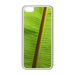 Ensete Leaf Apple Iphone 5c Seamless Case (white) by picsaspassion