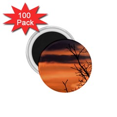 Tree Branches And Sunset 1 75  Magnets (100 Pack)  by picsaspassion