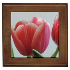 Red   White Tulip Flower Framed Tiles by picsaspassion