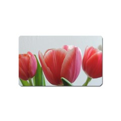 Red Tulips Magnet (name Card) by picsaspassion