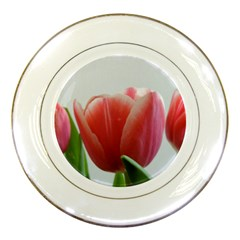 Red Tulips Porcelain Plates by picsaspassion