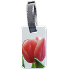 Red Tulips Luggage Tags (one Side)  by picsaspassion