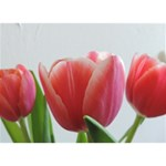 Red Tulips LOVE 3D Greeting Card (7x5) Front