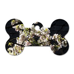 Blooming Japanese Cherry Flowers Dog Tag Bone (one Side) by picsaspassion