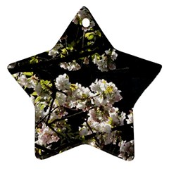 Japanese Cherry Flower Ornament (star)  by picsaspassion