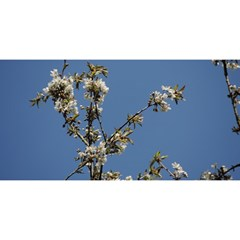 White Cherry Flowers And Blue Sky You Are Invited 3d Greeting Card (8x4) by picsaspassion