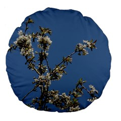 White Cherry flowers and blue sky Large 18  Premium Flano Round Cushions by picsaspassion