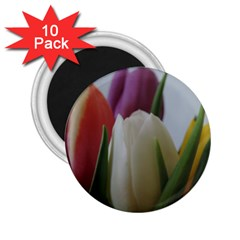 Colored By Tulips 2 25  Magnets (10 Pack)  by picsaspassion